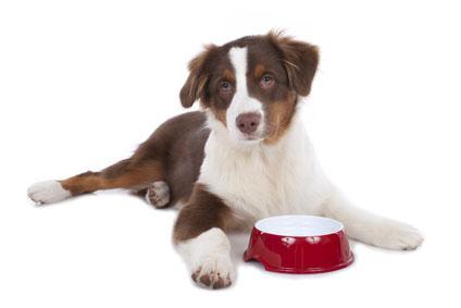 Durch Hundefutter Test das passende Futter finden