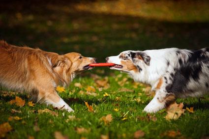 Socializing Puppy At Dog Park