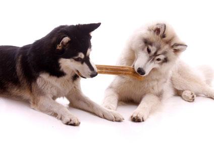 Hundefuttersorten im Test für Ihren Hund