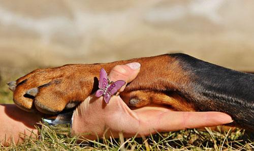 Bio Hundefutter ist etwas gutes für den Hund tun