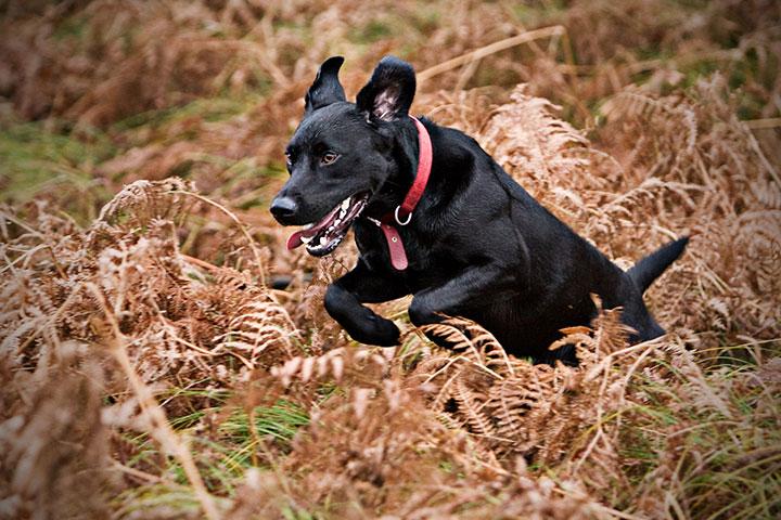 Hund springt durch gestrüpp