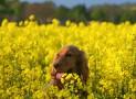 Zeckenabwehr bei Hunden